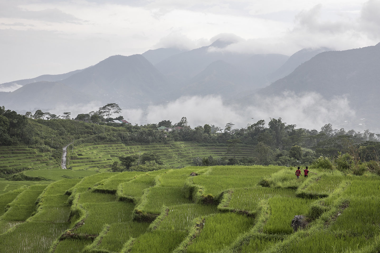 Sur les traces du patchouli en Indonésie